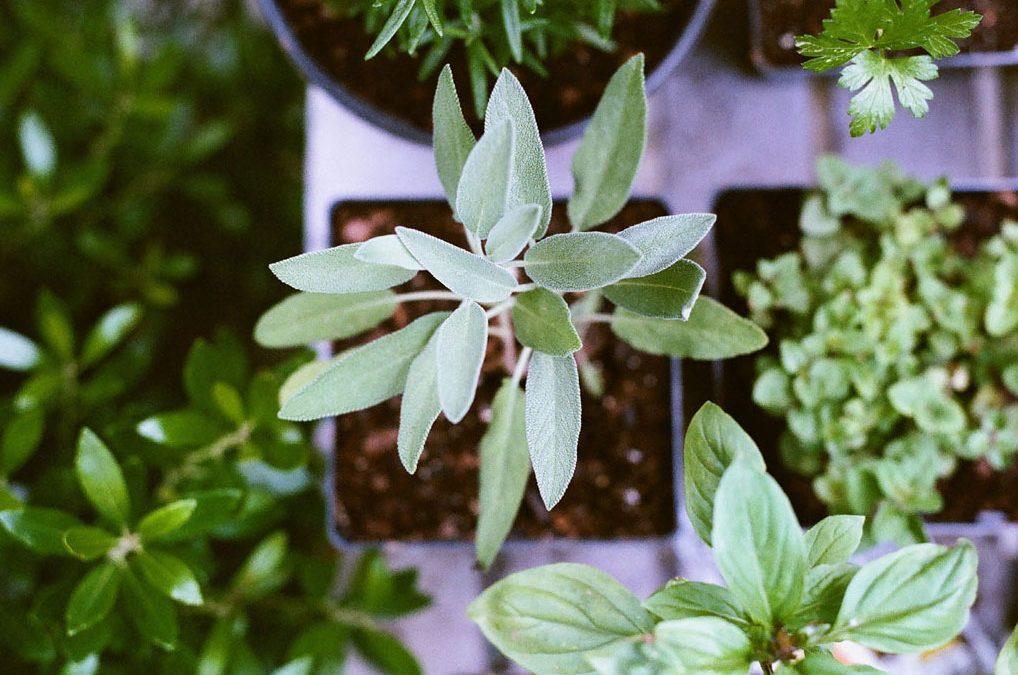 Cultive ervas aromáticas em casa!